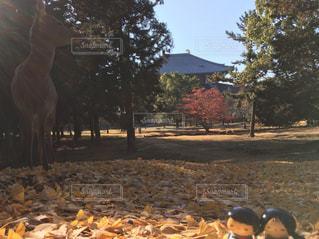 鹿と落ち葉と私達の写真・画像素材[908294]