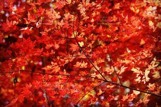 秋の始まり。の写真・画像素材[908082]