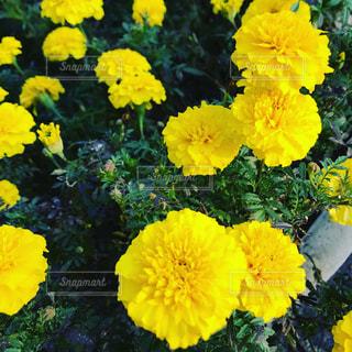 花の写真・画像素材[1049697]