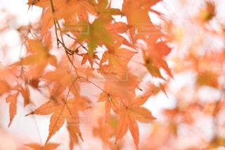 近くの木のアップ - No.909243