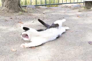 地面に横になっている猫 - No.909381