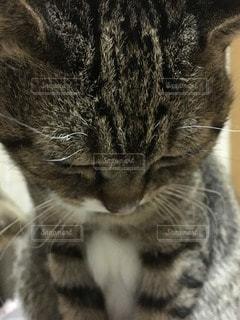 猫の写真・画像素材[28921]