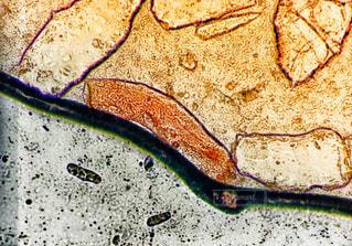 顕微鏡1の写真・画像素材[954411]