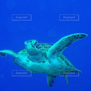 ウミガメとの遭遇の写真・画像素材[910289]