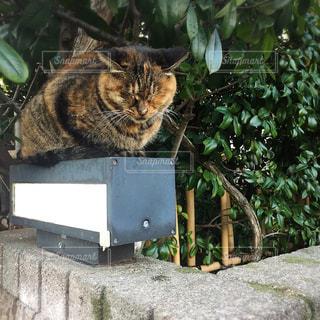 玄関に座っている猫の写真・画像素材[913561]
