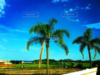 ヤシの木の前に木の写真・画像素材[910715]