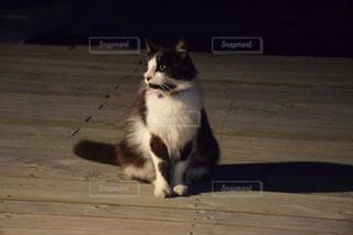 動物の写真・画像素材[910952]
