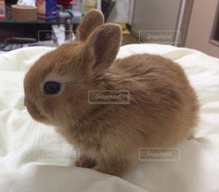 ベッドの上に座っているウサギの写真・画像素材[911103]