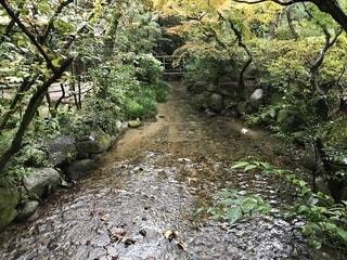 川縁の写真・画像素材[911167]