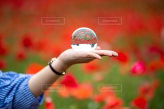 水晶玉の写真・画像素材[2847835]