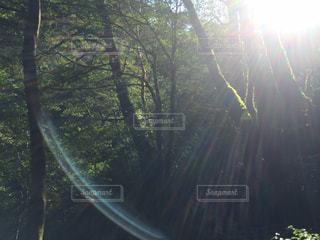 光と木々の写真・画像素材[912821]