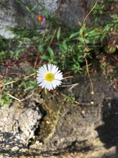 道端のお花の写真・画像素材[917175]