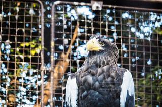 檻の中の鳥イーグルの写真・画像素材[912066]