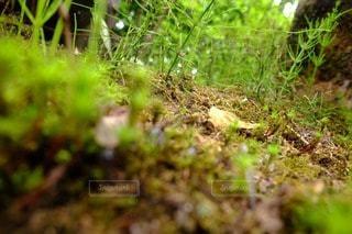 森林の写真・画像素材[28754]