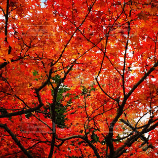 東京の秋の写真・画像素材[911869]