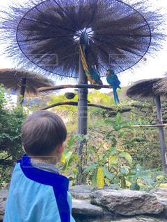 少年の青い傘を保持しています。の写真・画像素材[912051]