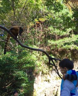 木からぶら下がって猿の写真・画像素材[912080]