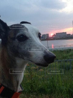 犬 - No.28854