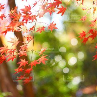 植物の花と木 - No.912248