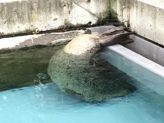 水の大きなプールの写真・画像素材[913697]