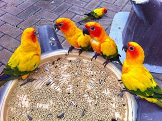 カラフルな鳥の写真・画像素材[952353]