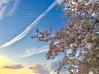 桜 - No.954482