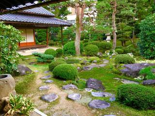 庭の写真・画像素材[967134]