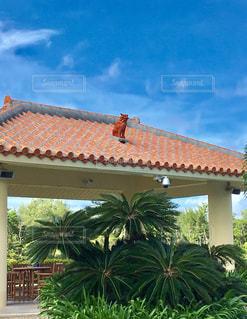 赤瓦とシーサーのバックに広がる、沖縄の青空の写真・画像素材[921066]