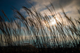 秋のそよ風の写真・画像素材[913338]