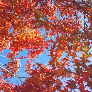 近くの木のアップの写真・画像素材[913339]