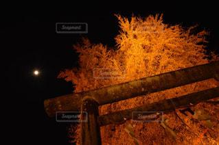 夜の紅葉 - No.913325