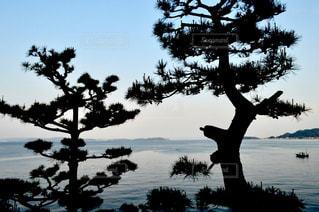 海と松 - No.915706