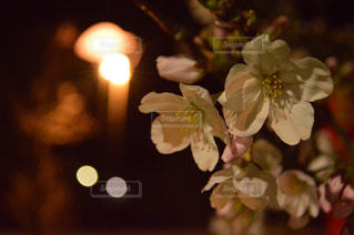 夜桜の写真・画像素材[1086943]