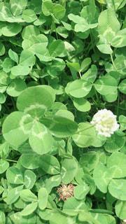 緑の植物のグループの写真・画像素材[2258327]