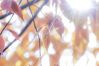 紅葉と光 - No.913600