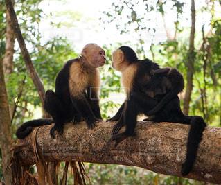 枝の上に座って猿 - No.1068362