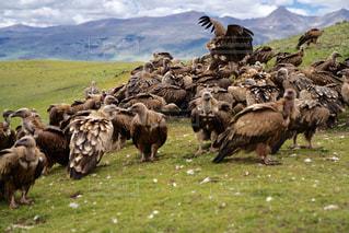 山の上に立つ羊の群れの写真・画像素材[2339635]