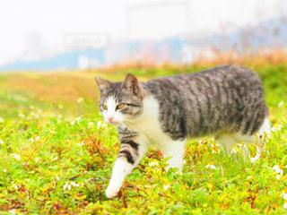 草の中に立っている猫 - No.914303