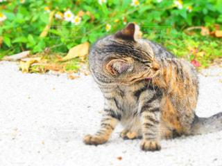 汚れフィールドの上に座っている猫の写真・画像素材[914307]