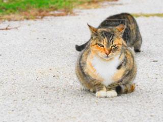 地面に横になっている猫 - No.914310
