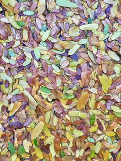 カラフル落ち葉の写真・画像素材[914022]