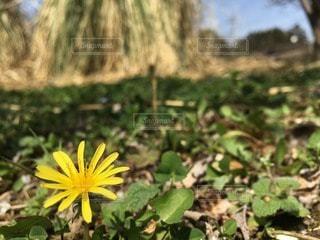 自然の写真・画像素材[29622]
