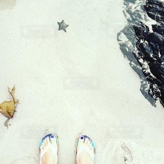雪の写真・画像素材[29013]