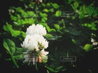 花の写真・画像素材[29015]
