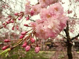 花の写真・画像素材[29030]