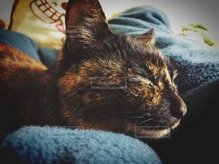 猫 - No.29261