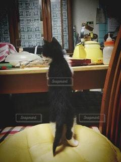 猫が好きの写真・画像素材[116962]
