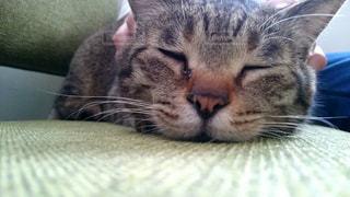 猫の写真・画像素材[437359]