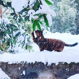 初雪の写真・画像素材[575846]