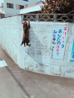 擁壁を登る猫 - No.1088586